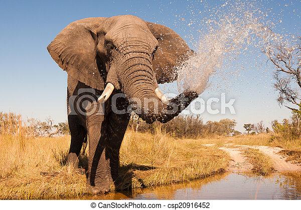 éléphant - csp20916452