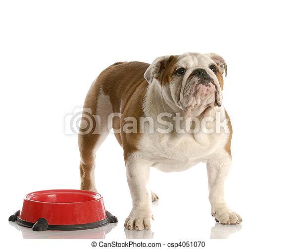 être, attente, fédéral, chien - csp4051070