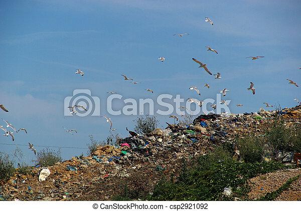 08, décharge ordures - csp2921092