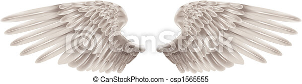 ailes, blanc - csp1565555