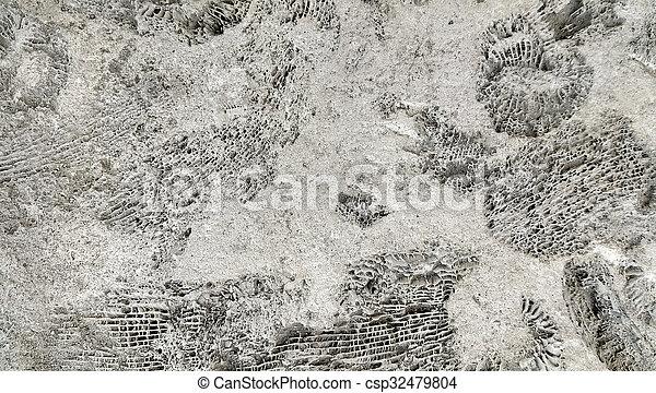 ammonite, fossiles, rocher - csp32479804