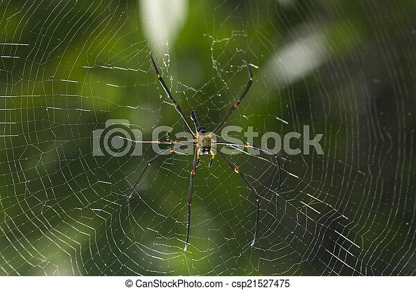 araignés, brun, centre, toile - csp21527475