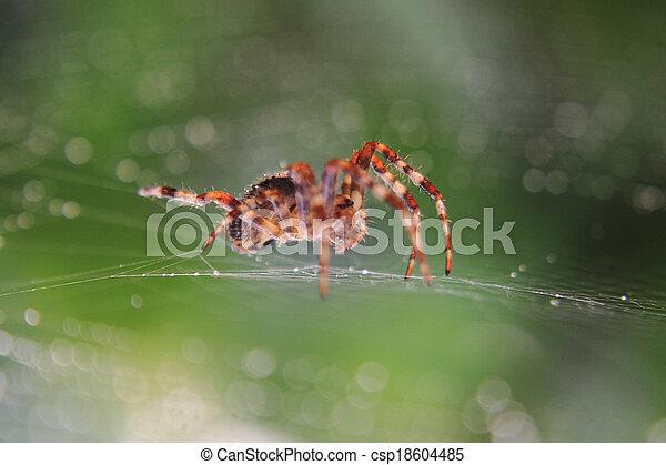 araignés, brun - csp18604485