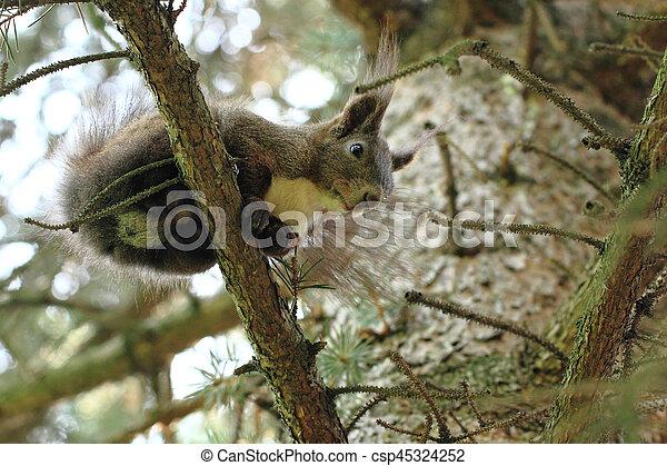 arbre, écureuil - csp45324252