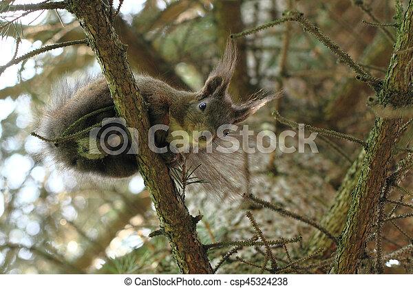 arbre, écureuil - csp45324238