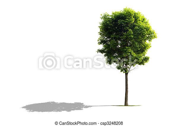 arbre, érable - csp3248208