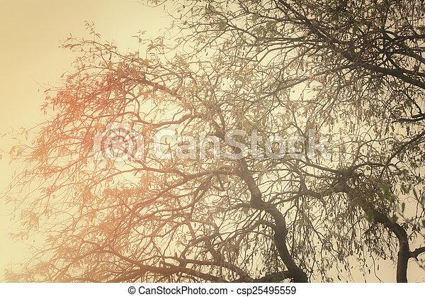 arbre diverge - csp25495559