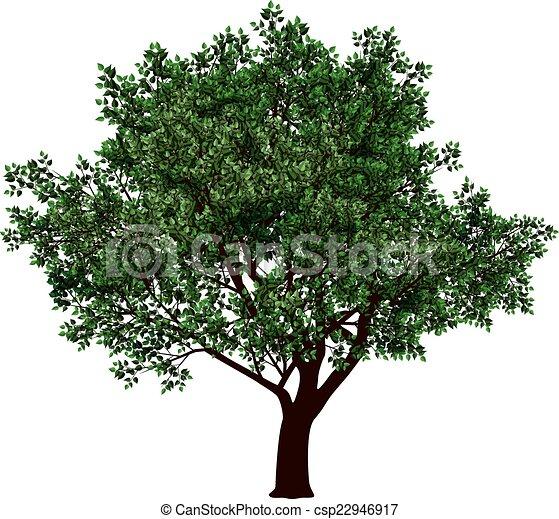 arbre, feuillage - csp22946917