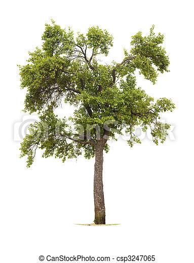 arbre - csp3247065