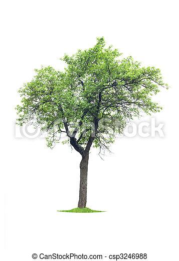 arbre - csp3246988
