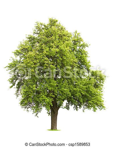 arbre, isolé - csp1589853
