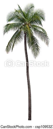 arbre noix coco, isolé, paume, fond, blanc - csp10953272