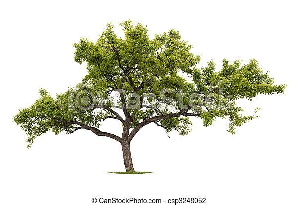 arbre - csp3248052