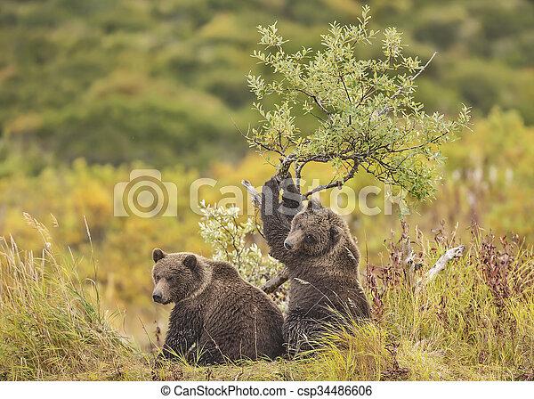 arbre saule, petits, ours, jouer - csp34486606
