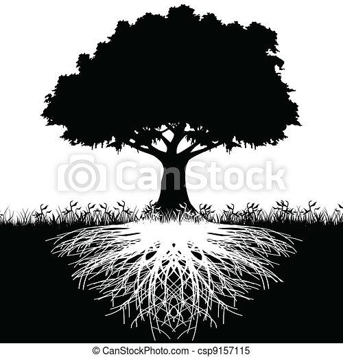 arbre, silhouette, racines - csp9157115