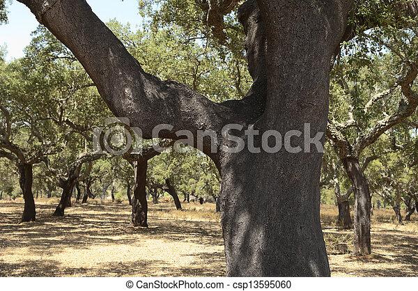 arbres, bouchon - csp13595060