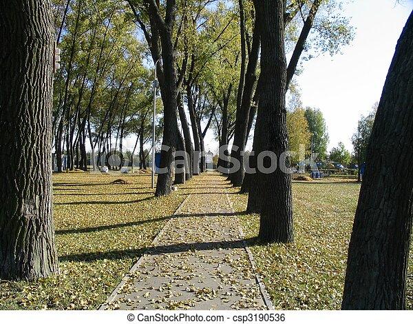 arbres, fond - csp3190536