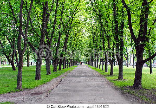arbres, parc, vert, beaucoup, beau - csp24691622