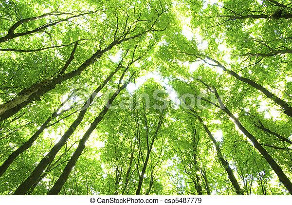 arbres verts - csp5487779