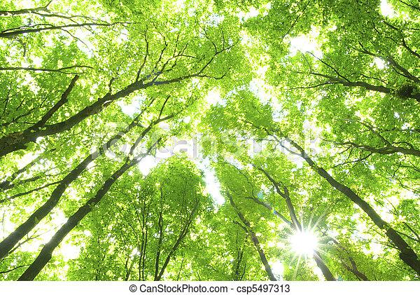 arbres verts - csp5497313