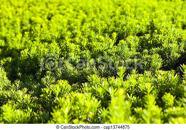 arrière-plan vert - csp13744875