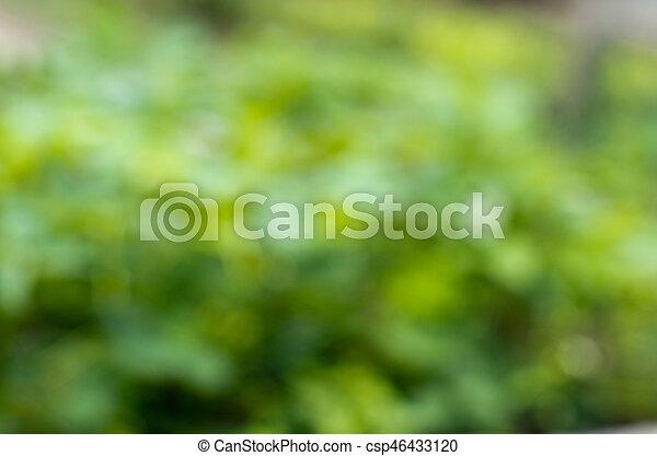 arrière-plan vert - csp46433120