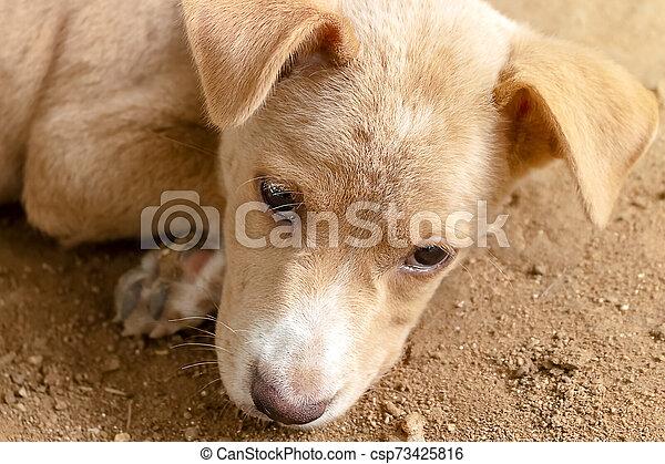 attente, chien, manger, nourriture, enchaîné, leur, propriétaires - csp73425816