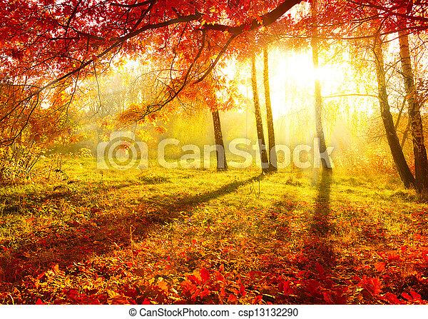 automnal, arbres, leaves., automne, park., automne - csp13132290