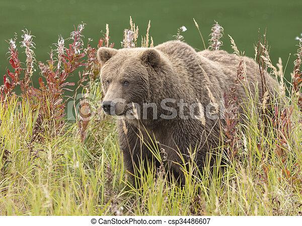 automne, brun, couleurs, ours - csp34486607