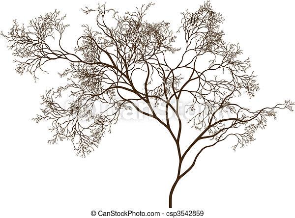 beau, arbre - csp3542859