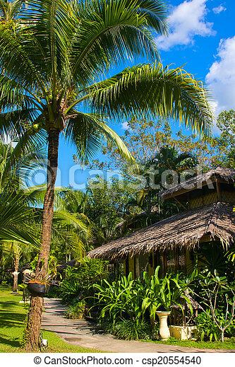 beau, arbre tropical, paume, maison, thaïlande - csp20554540