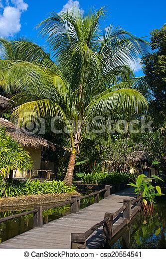 beau, arbre tropical, paume, thaïlande, plage - csp20554541
