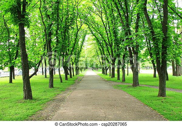 beau, beaucoup, parc, arbres verts - csp20287065