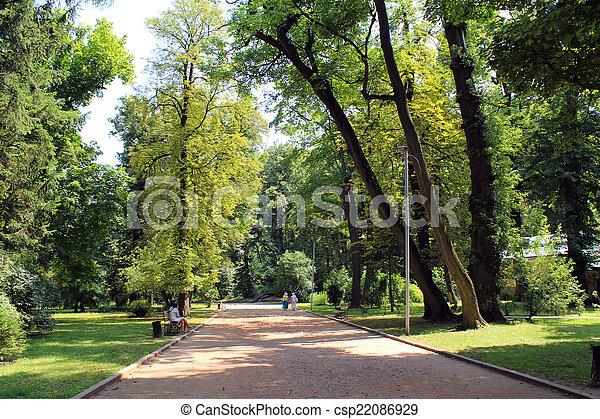 beau, beaucoup, parc, arbres verts - csp22086929