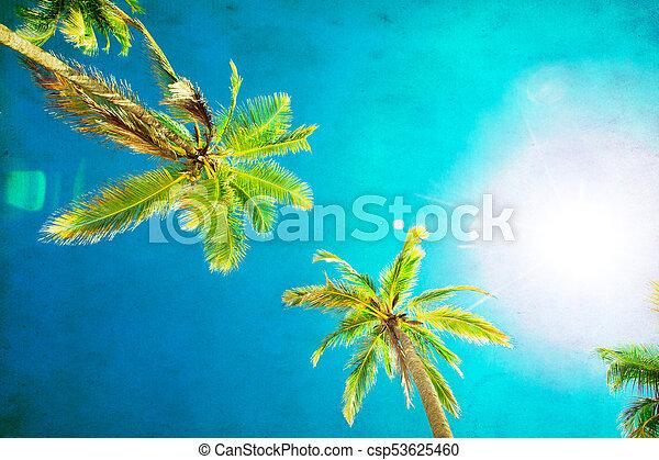 beau, noix coco, arbres, exotique, paume, fond - csp53625460