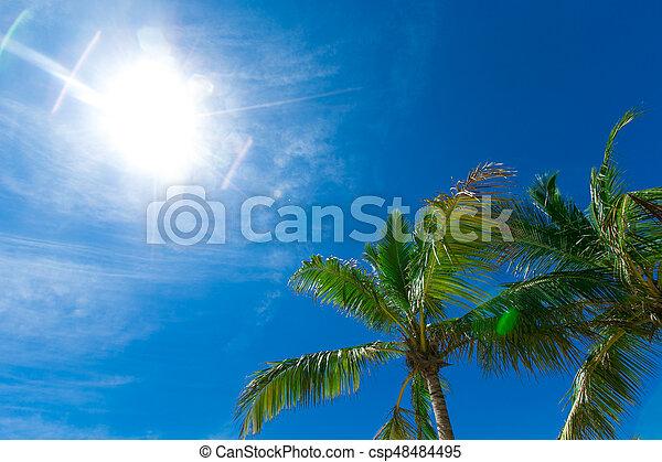 beau, noix coco, arbres, exotique, paume, fond - csp48484495