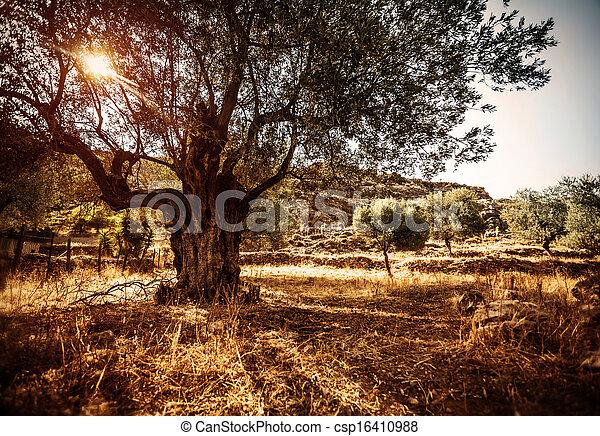 beau, olivier - csp16410988