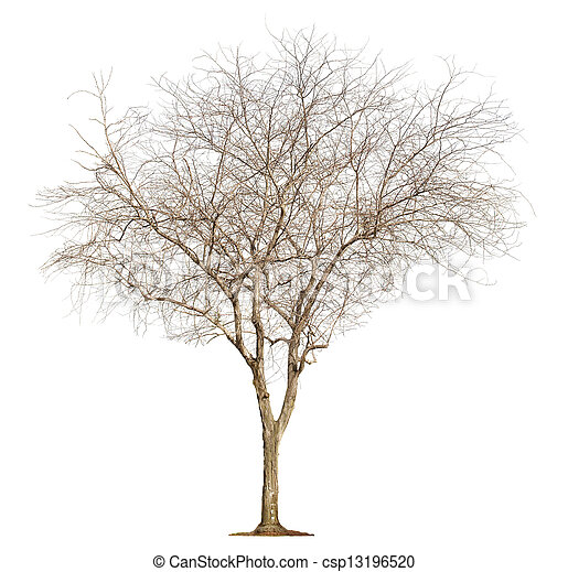 blanc, arbre, fond - csp13196520