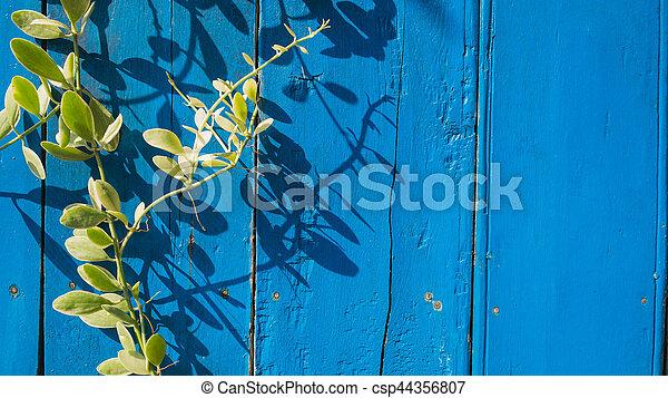 bleu, bois, lierre, fond - csp44356807