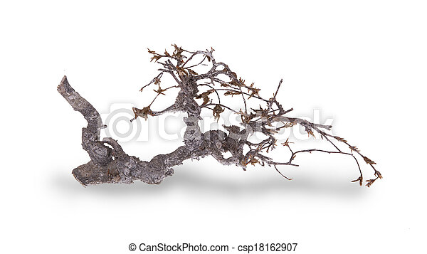 branche sèche - csp18162907