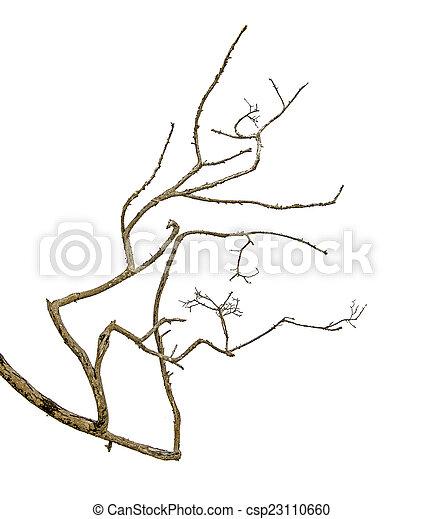 branche sèche - csp23110660