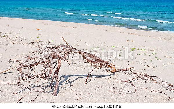 branche sèche - csp15001319