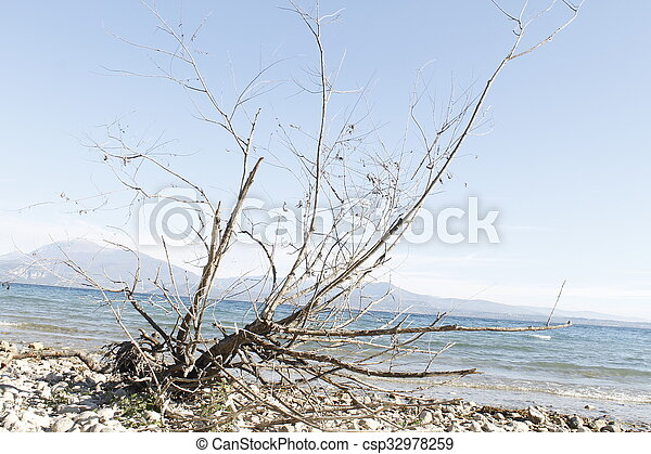 branche sèche - csp32978259