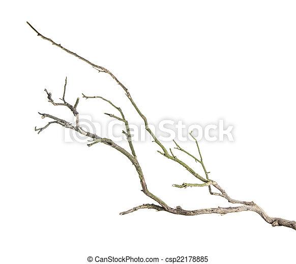 branche sèche - csp22178885