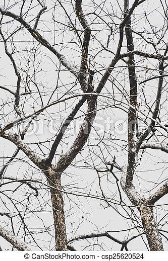 branche sèche - csp25620524
