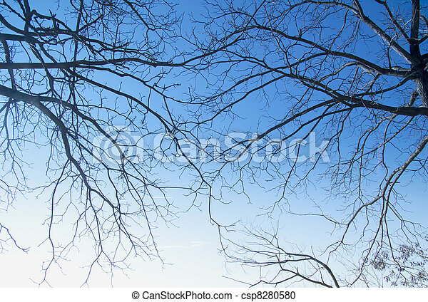 branches - csp8280580