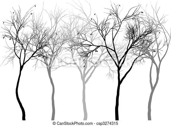 brumeux, forêt, vecteur - csp3274315