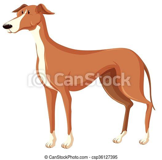 brun, fourrure, chien - csp36127395