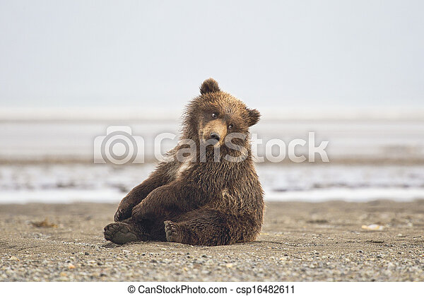brun, petit, ours - csp16482611