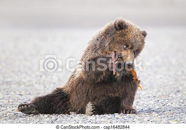 brun, petit, ours - csp16482844
